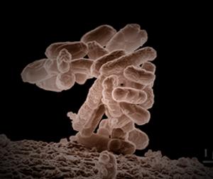 e coli in water - photo #2